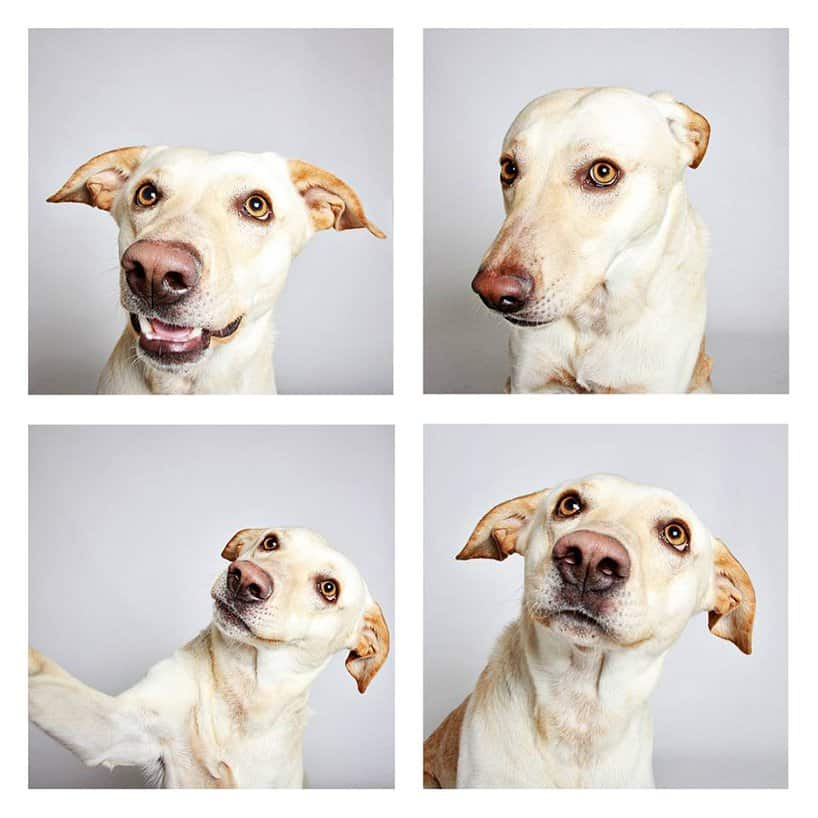 Adoptable Dogs Photos by Humane Society Of Utah # 3