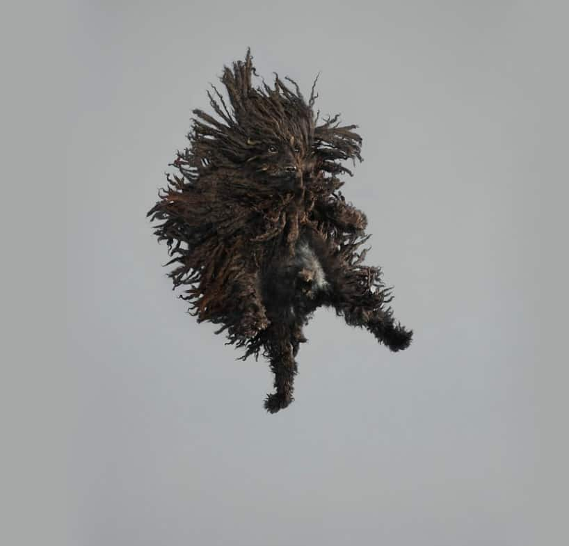 Flying Dogs Photos by Julia Christe 3