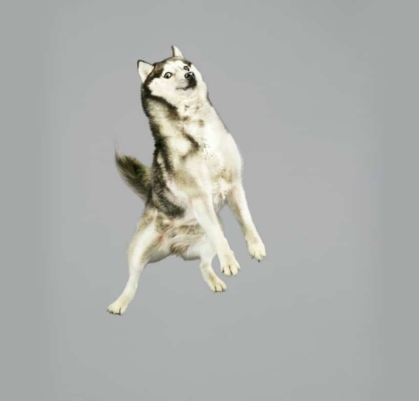 Flying Dogs Photos by Julia Christe 6