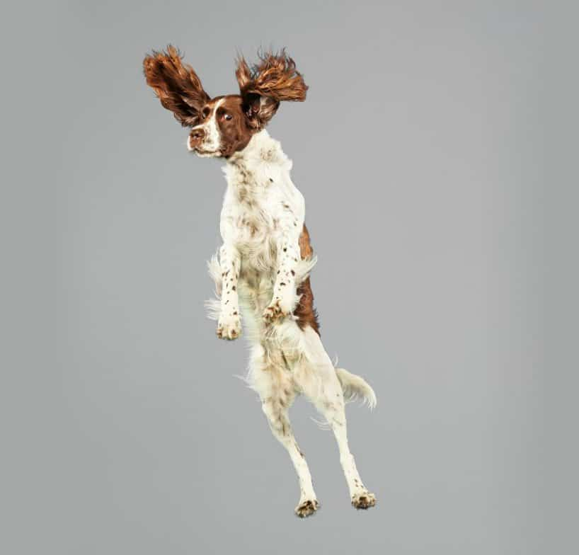 Flying Dogs Photos by Julia Christe 8