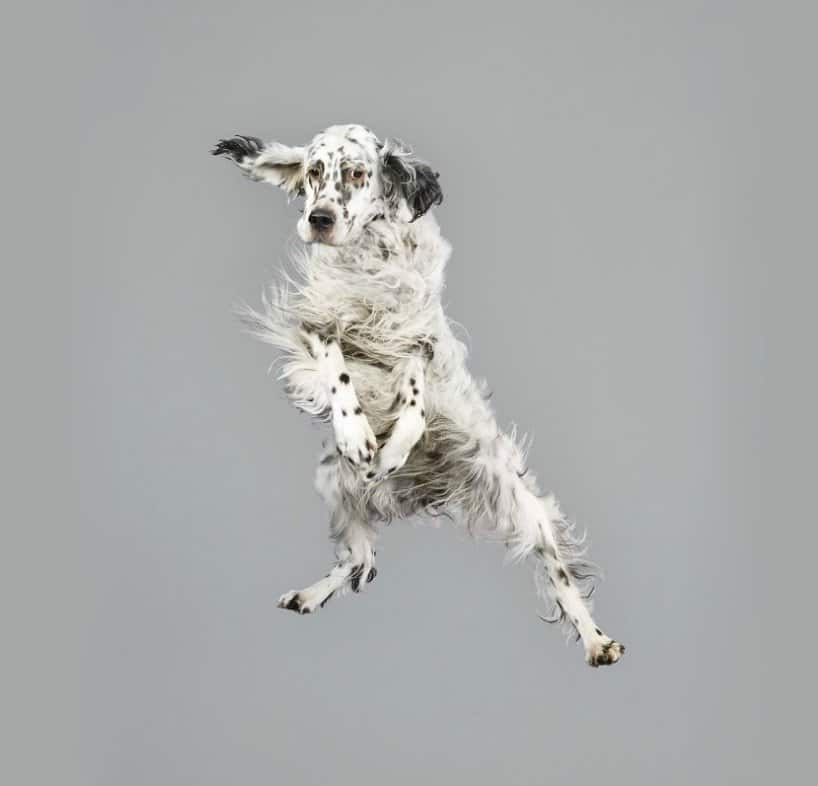 Flying Dogs Photos by Julia Christe 9