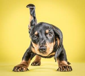 Puppies Photos by Carli Davidson # 11
