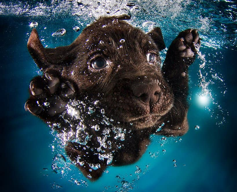 Seth Cassel Photo # Underwater Puppies Splash 1