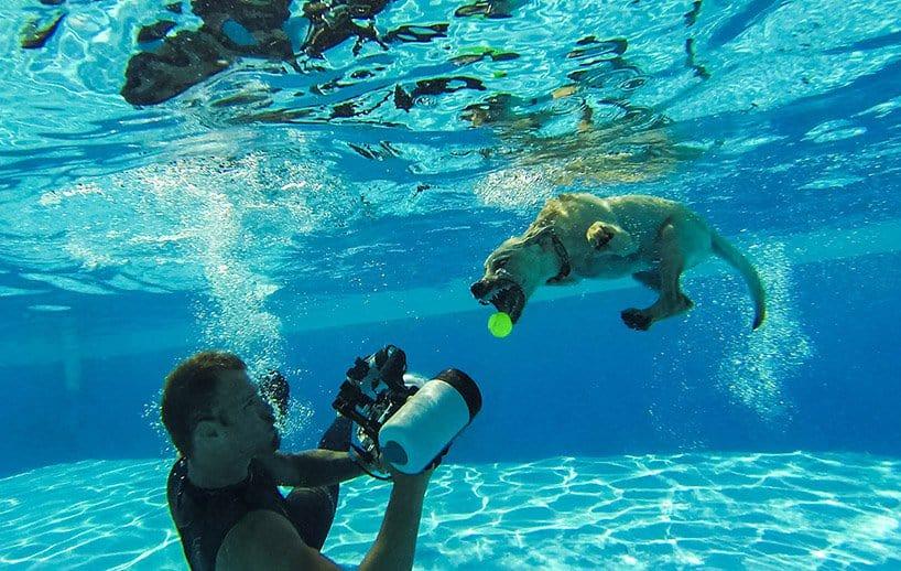Seth Cassel Photo # Underwater Puppies Splash 10