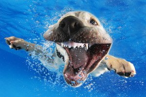 Seth Cassel Photo # Underwater Puppies Splash 4