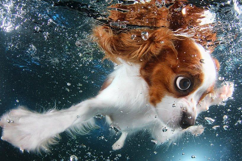 Seth Cassel Photo # Underwater Puppies Splash 6