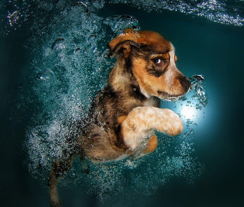 Seth Cassel Photo # Underwater Puppies Splash 7