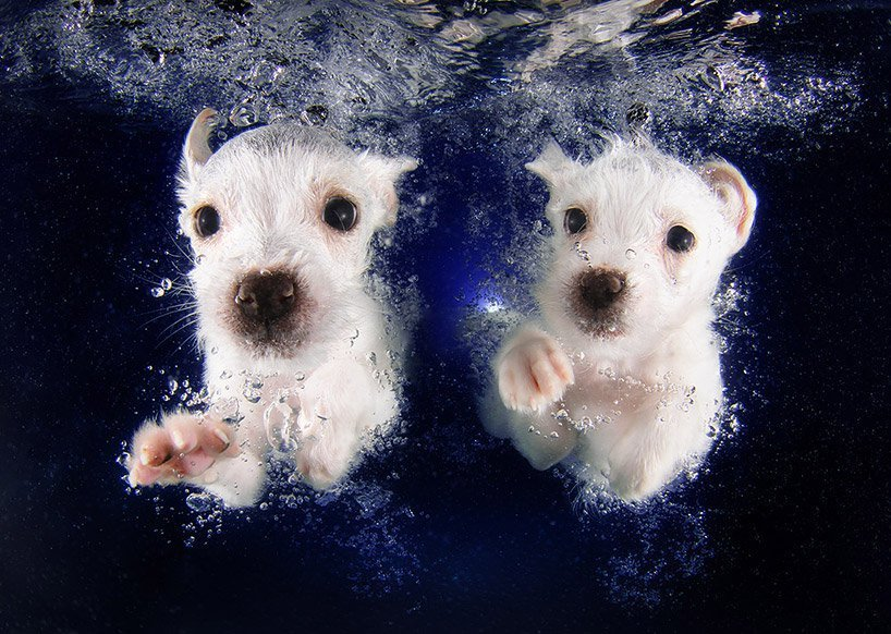 Seth Cassel Photo # Underwater Puppies Splash 8