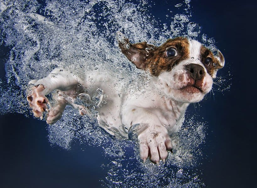 Seth Cassel Photo # Underwater Puppies Splash 9