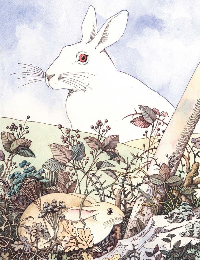 La-collina-dei-conigli_694