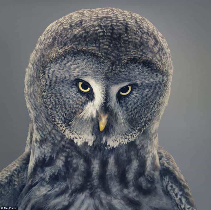 Tim Flach - Animal Photography - More Than Human 03