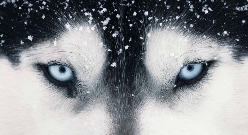 Tim Flach - Animal Photography - More Than Human 07
