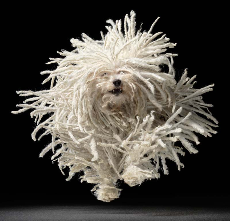 Tim Flach - Animal Photography - More Than Human 08