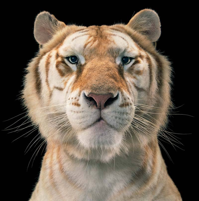 Tim Flach - Animal Photography - More Than Human 23