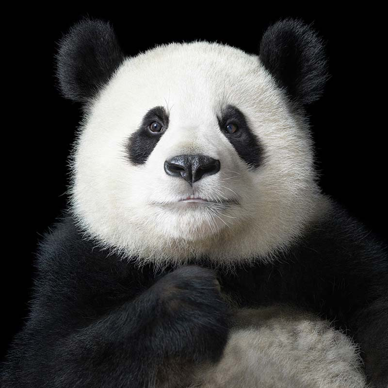 Tim Flach - Animal Photography - More Than Human 27