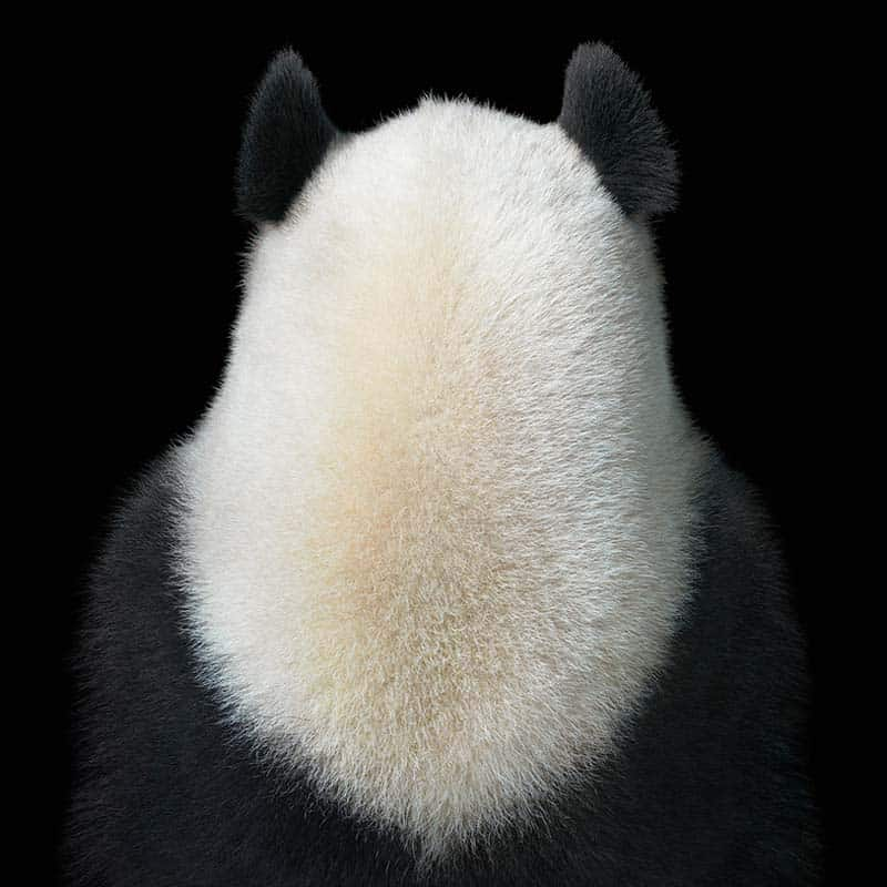 Tim Flach - Animal Photography - More Than Human 28