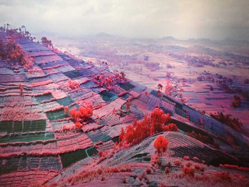 Richard Mosse - Psychedelic Battlefronts 06