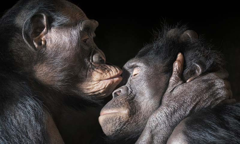 Tim Flach - Animal Photography - More Than Human 01