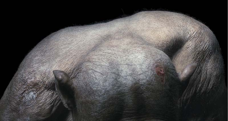 Tim Flach - Animal Photography - More Than Human 04