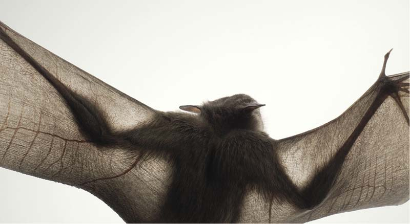 Tim Flach - Animal Photography - More Than Human 05