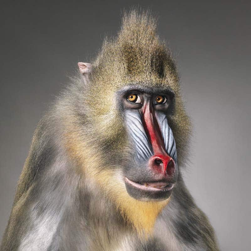 Tim Flach - Animal Photography - More Than Human 10