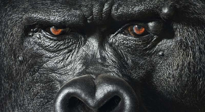 Tim Flach - Animal Photography - More Than Human 13