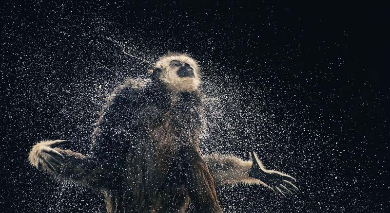 Tim Flach - Animal Photography - More Than Human 15