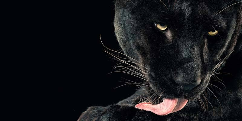 Tim Flach - Animal Photography - More Than Human 16