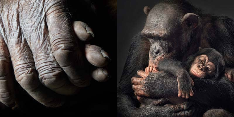 Tim Flach - Animal Photography - More Than Human 17