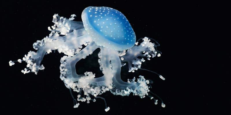 Tim Flach - Animal Photography - More Than Human 18