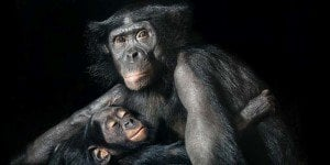 Tim Flach - Animal Photography - More Than Human 21 - feat1
