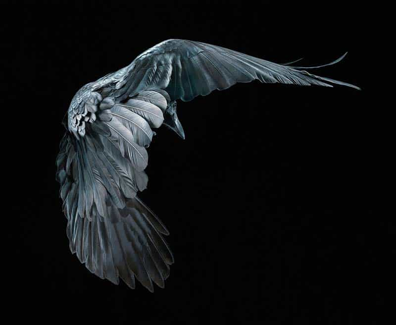 Tim Flach - Animal Photography - More Than Human 25