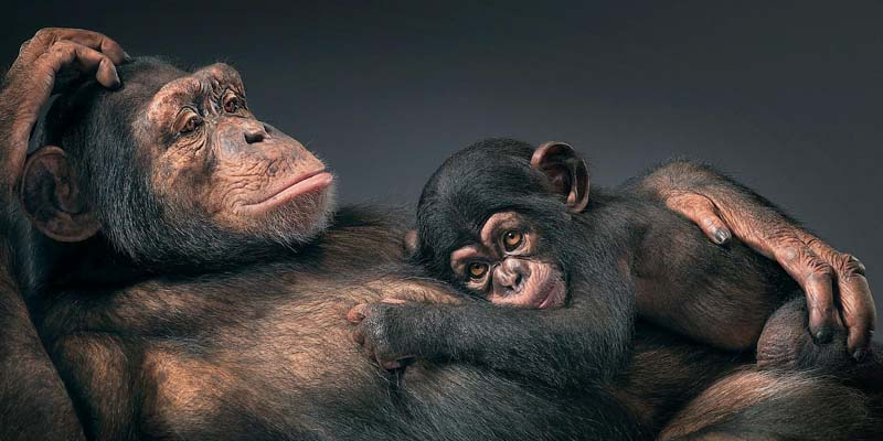 Tim Flach - Animal Photography - More Than Human 32