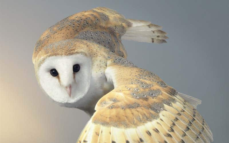 Tim Flach - Animal Photography - More Than Human 33