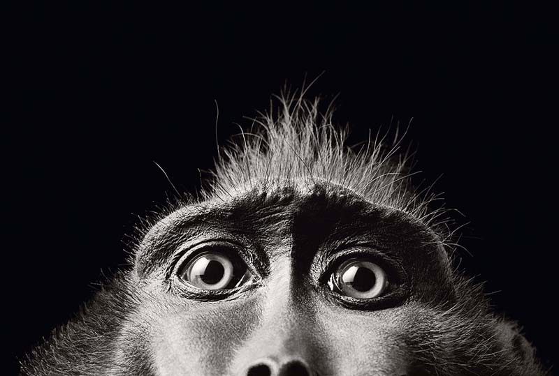 Tim Flach - Animal Photography - More Than Human 34
