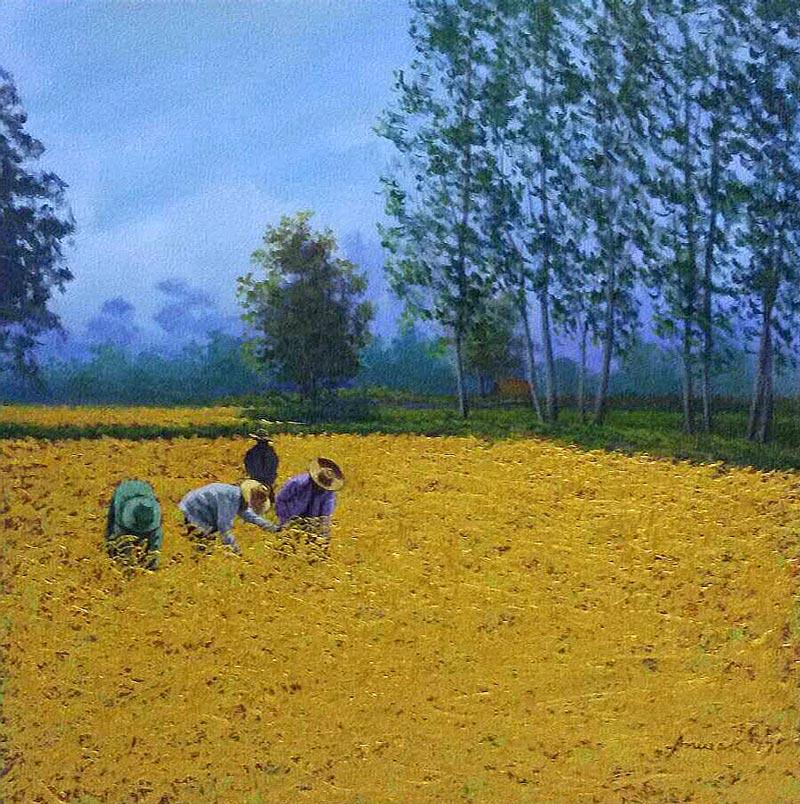 Anurak - Farmers 30 - 50 x 50 - 3
