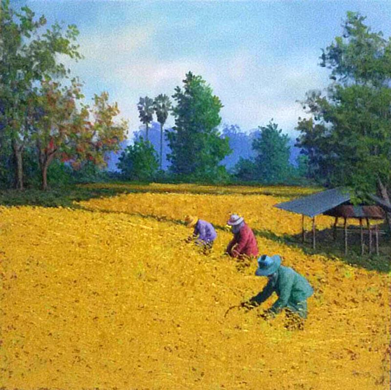 Anurak - Farmers 31 - 50 x 50 - 3