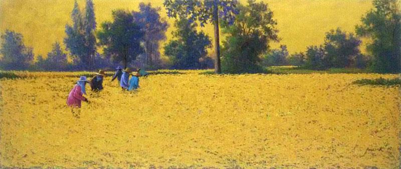 Anurak - Farmers 33 - 120 x 50 - 6-5