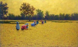 Anurak - Farmers 34 - 115 x 70 - 7-5