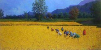 Anurak - Farmers 35 - 140 x 70 - 8-5