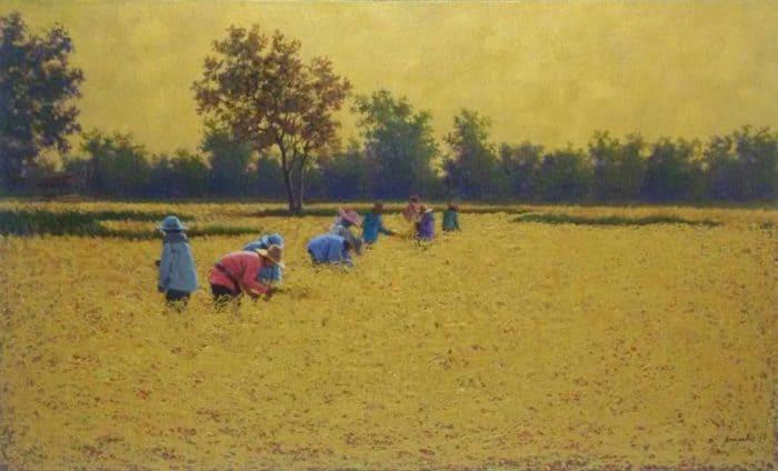 Anurak - Farmers 36 - 115 x 70 - 7-5