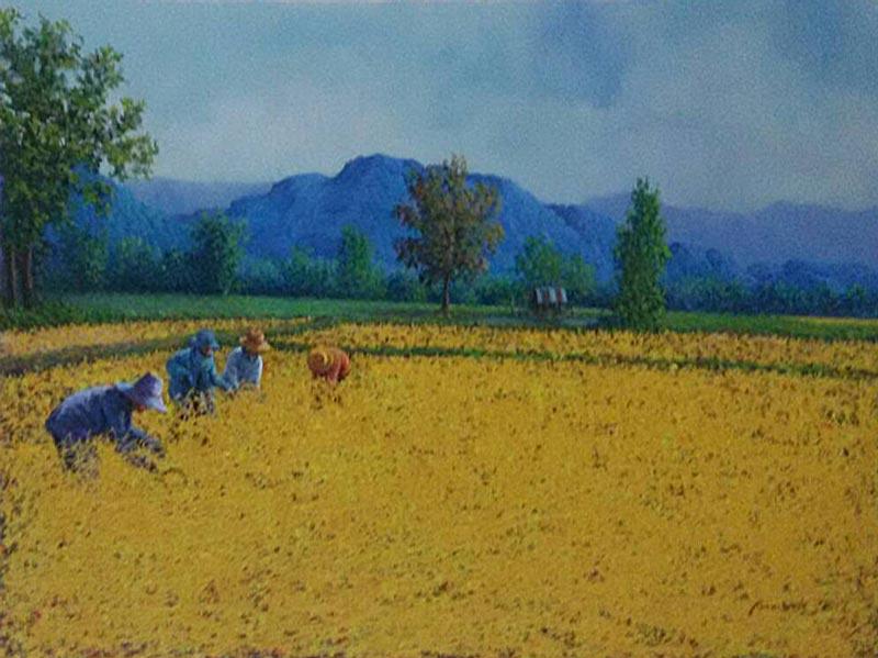 Anurak - Farmers 43 - 80 x 60 - 6-5