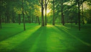 Tanida - Green Forest - 210 x 120 - 25