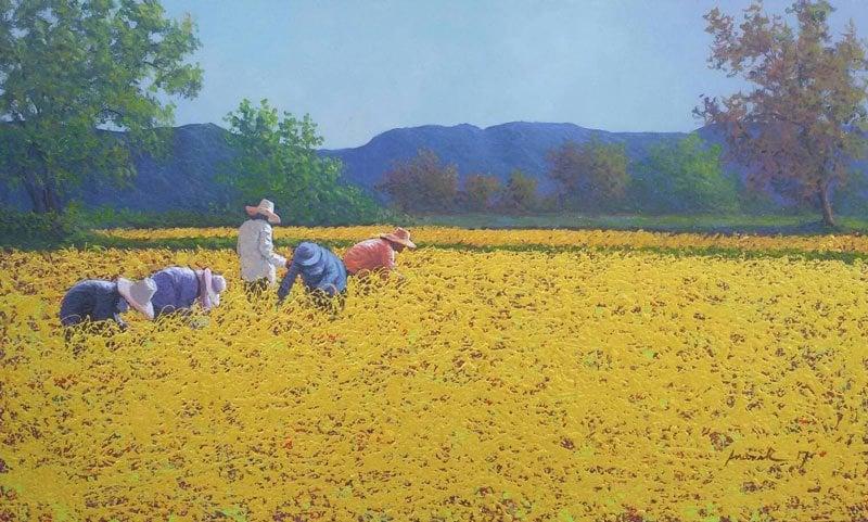 Anurak - Farmers 47 - 45 x 75 - 4-5
