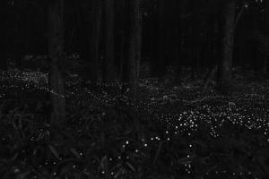 M97 Shanghai Gallery - Hiroshi Maeda - Fireflies